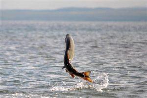 Nanaimo fishing charter