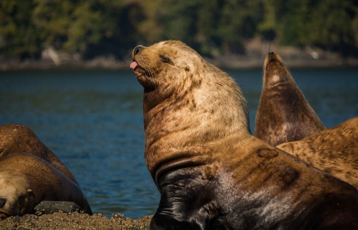 nanaimo wildlife tour